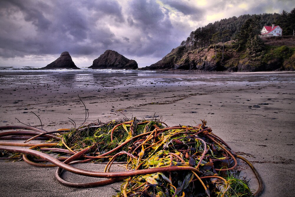 Left Behind ~ Heceta Head Lighthouse ~ by Charles & Patricia   Harkins ~ Picture Oregon