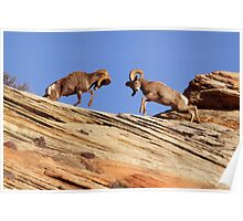 Bighorns Battling in Red Rock Country Poster