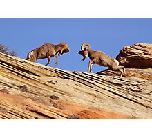 Bighorns Battling in Red Rock Country Photographic Print