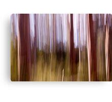 Karri Trees, Margaret River, Western Australia Canvas Print