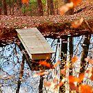 On Golden Pond by Leon Heyns