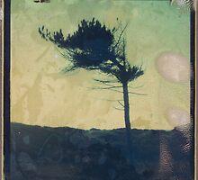 TREE 11 by Nathan Pendlebury