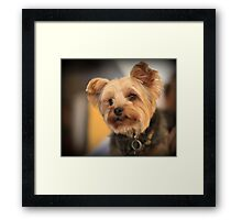 Adorable dog Framed Print