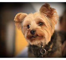 Adorable dog Photographic Print