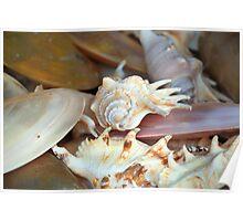 Shells  number 4 Poster
