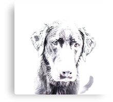 Black And White - Bounce Canvas Print