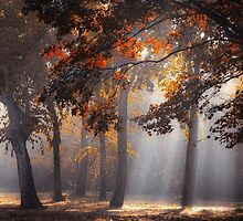 Rays From Above by Ildiko Neer