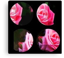 Pink Roses in Anzures 1 Art Circles 3 Canvas Print
