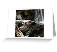 Lasting Color Greeting Card