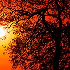 Sunrise Tree  Silhouette by Darren Burroughs