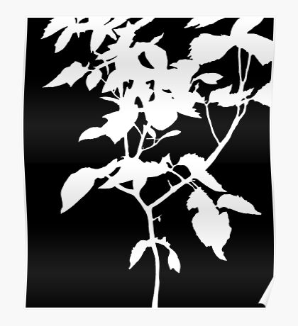 White Nature Poster