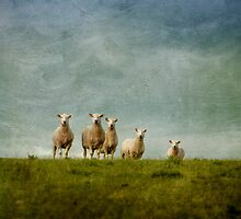 Sheep on the Hill by Jill Ferry