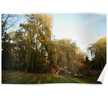 Weeping willow with broken wing Poster