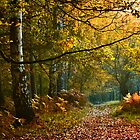Descend into Autumn by Loren Goldenberg-Kosbab