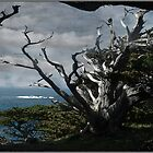 Point Lobos Serenity by Wayne King