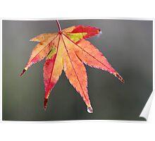 yamamomiji shi Poster