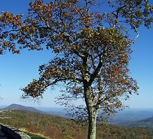 Tree On The Overlook by James Brotherton
