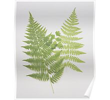 Understory Finds Poster