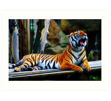 Tiger Yawning Art Print