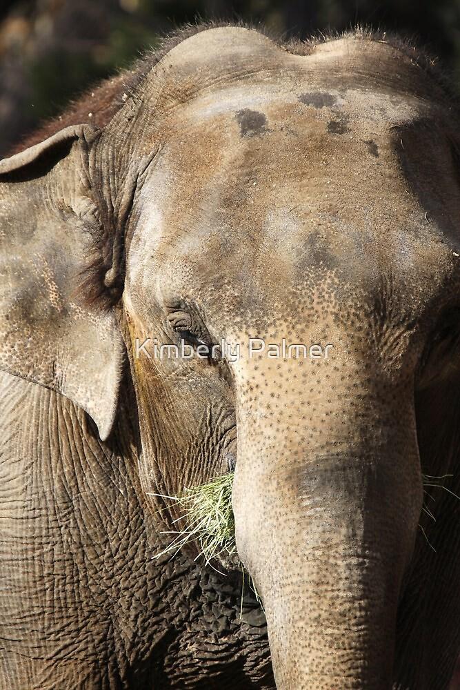 Elephant by Kimberly Palmer
