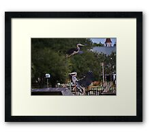 One Great Blue Heron taking Off the Other Landing Framed Print