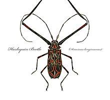 Harlequin Beetle - Acrocinus longimanus by 40degreesSouth