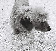 Dachshund on farm by RareMood