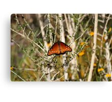 Butterfly in the desert Canvas Print