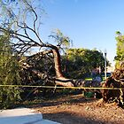 Downed Tree by Ron Hannah