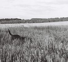 Dog in field by RareMood