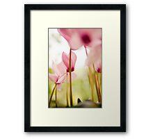 Cyclamen Forest Framed Print
