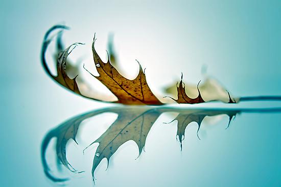 a saucerful of secrets by DmitriyM