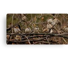 The Brush Pile Bunch Canvas Print