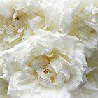 roses roses III by Floralynne