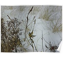 Sea Grass and Dried Weeds Poster