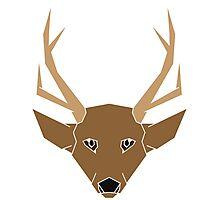 Deer Lighter Photographic Print