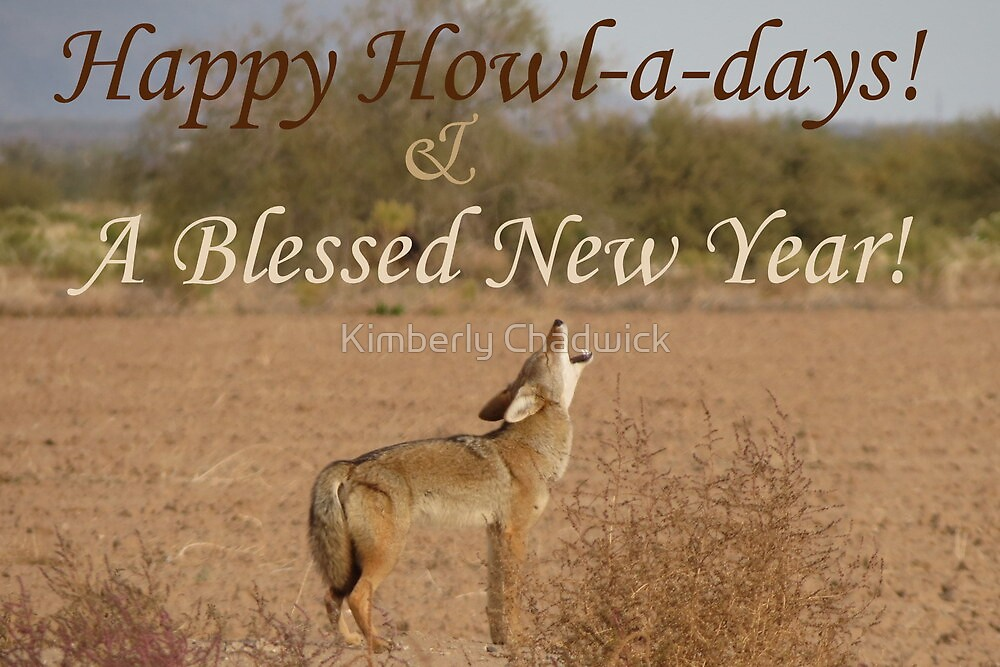Coyote Howl-A-Day Card by Kimberly Chadwick