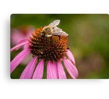 Bee close-up Canvas Print