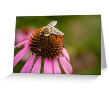 Bee close-up Greeting Card