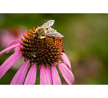 Bee close-up Photographic Print