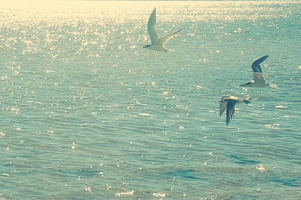 Three Birds by Carol Knudsen