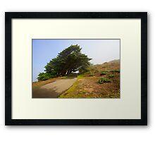 Wind swept trees Framed Print