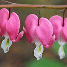Beauty of Bleeding Hearts by Deborah Crew-Johnson