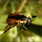 Xmas Beetle by Helenvandy