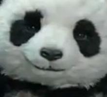 Panda Cheese Sticker