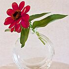 Single Pink Zinnia Blossom by Sandra Foster