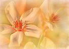 summer's flourish by Teresa Pople