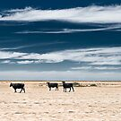 Black Cows by dmbphotography