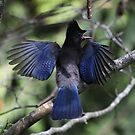 Look At My Wings by Alyce Taylor