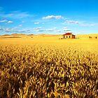 On Golden Fields by Bill  Robinson